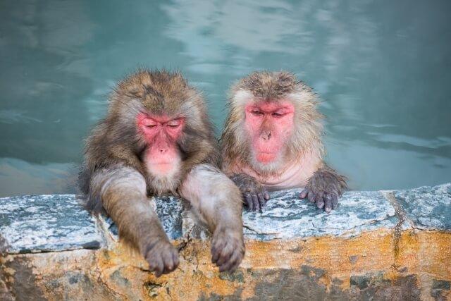 お風呂に入る猿