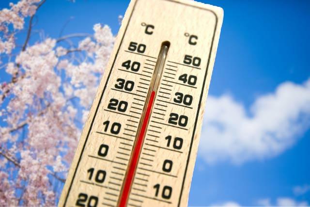 桜と温度計